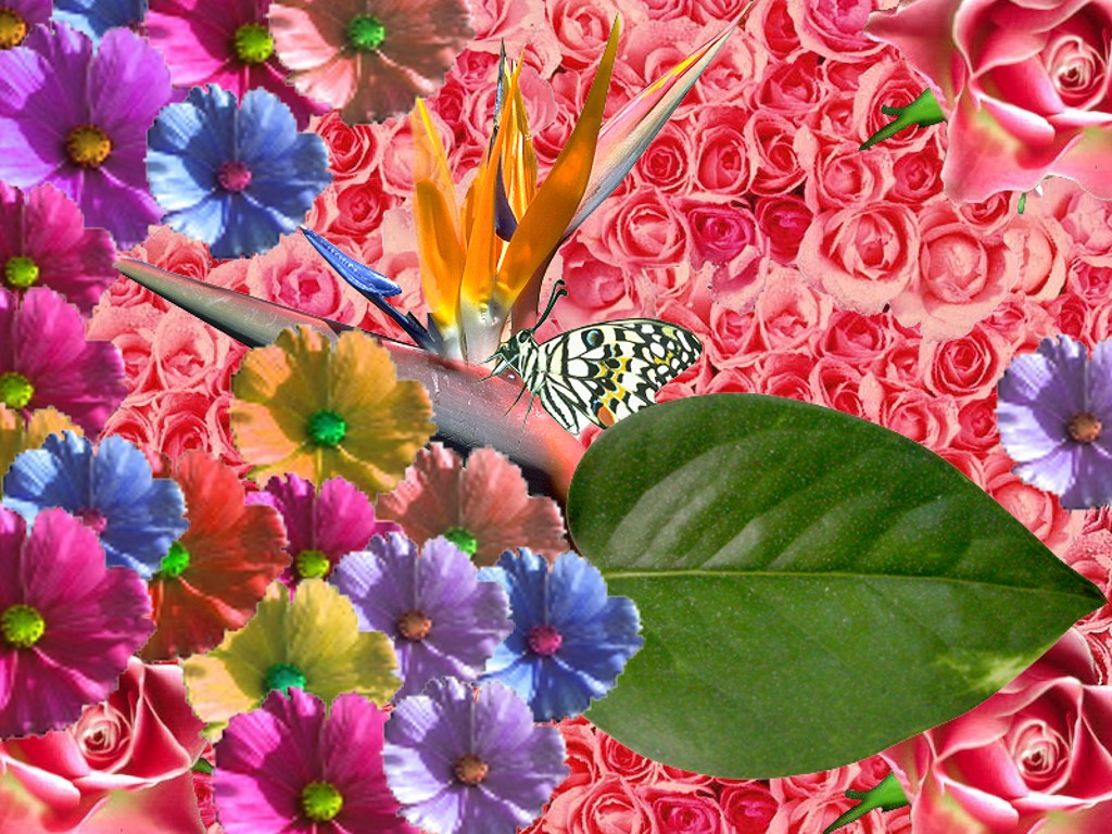 Popular   Wallpaper Home Screen Spring - free+spring+wallpaper1  Collection_4818.jpg