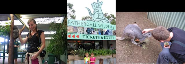 Kids Koala T Kampus Glendale Az