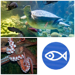 The New England Aquarium Is Now Part Of Our Discount