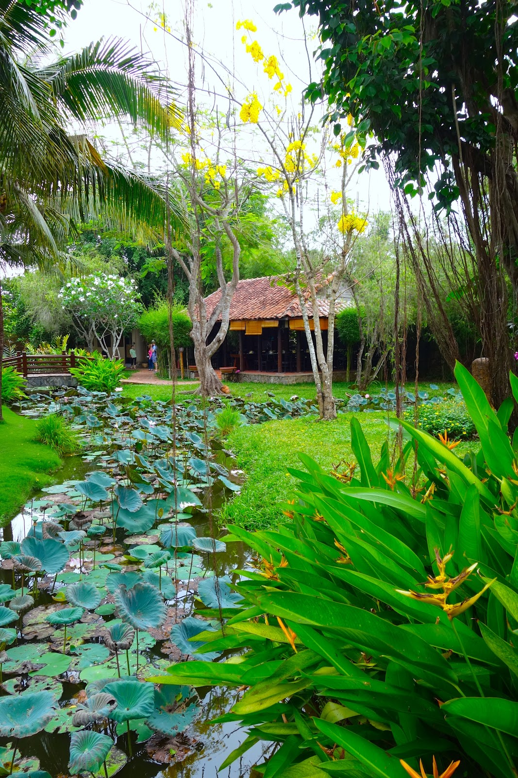 lotus and bird of paradise pond Vietnam 2015