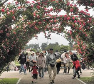 Parque das rosas Japão