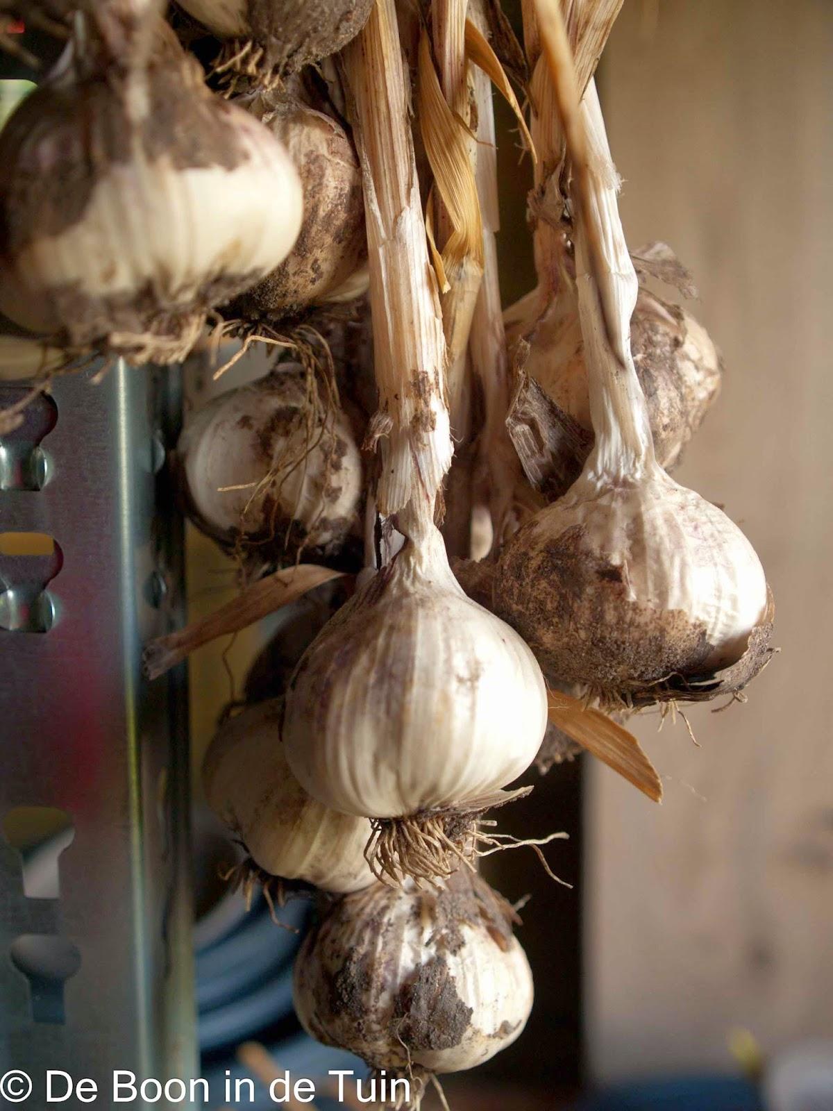 pesto maken,  zelf pesto maken,  basilicum pesto, hoe maak je pesto, zo maak je pesto,  baisilicumpesto, pesto met olijfolie,  pesto met knoflook, snel pesto maken,  makkelijk pesto maken, makkelijke pesto