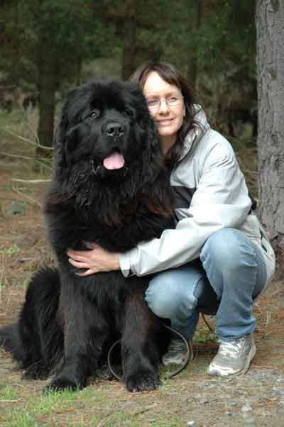 Newfoundland Dog Size