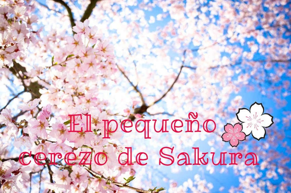El pequeño cerezo de Sakura