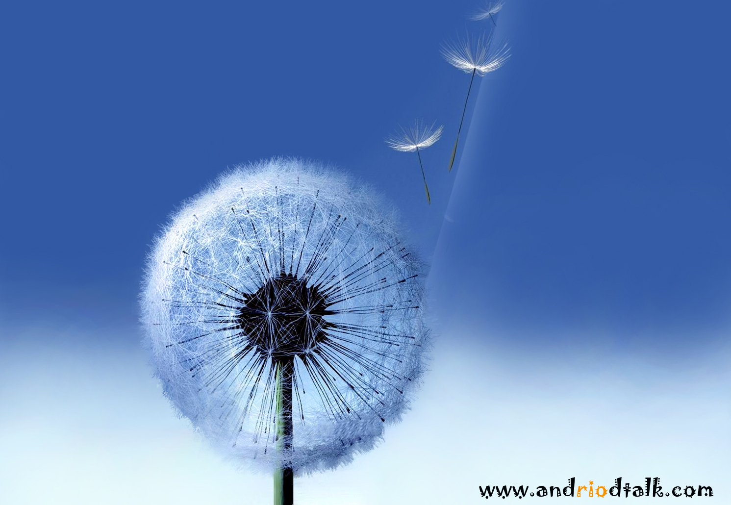 Galaxy S3 Stock Dandelion live HD animated wallpaper android apk