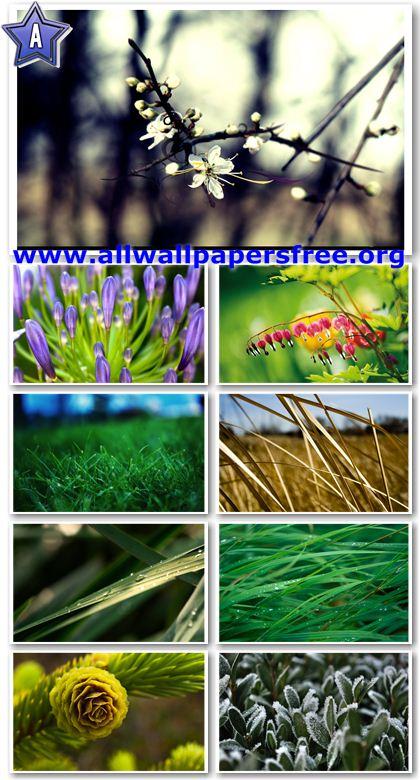 50 Amazing Nature HD Wallpapers 2560 X 1600 [Set 1]
