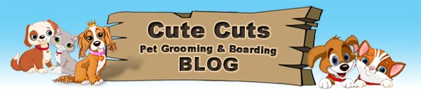 Cute Cuts Pet Grooming