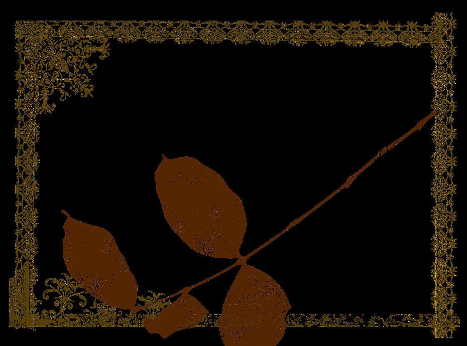 Nid de Tissus