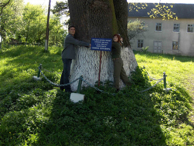 Legendary Oak of Mariampil (Western Ukraine)