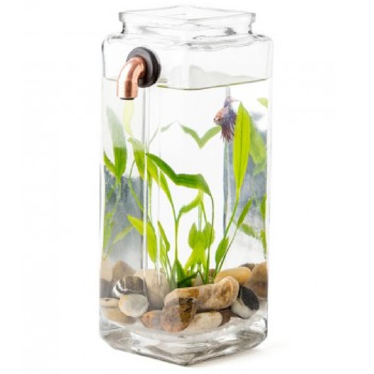 un aquarium autonettoyant