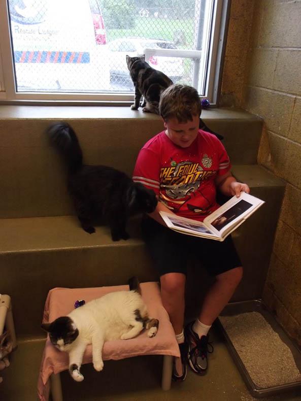 lectura a gatos Book Buddies