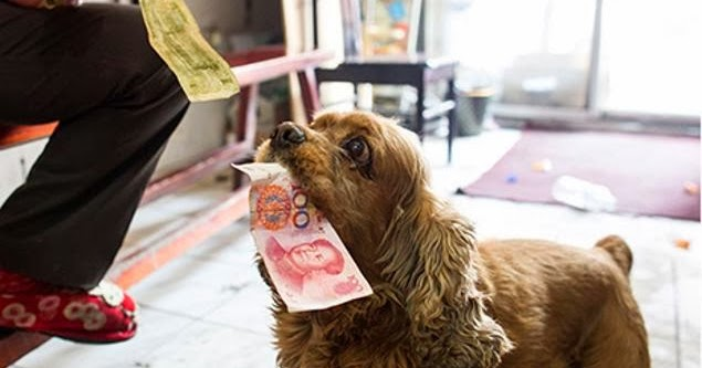 Dog Buys His Own Treats