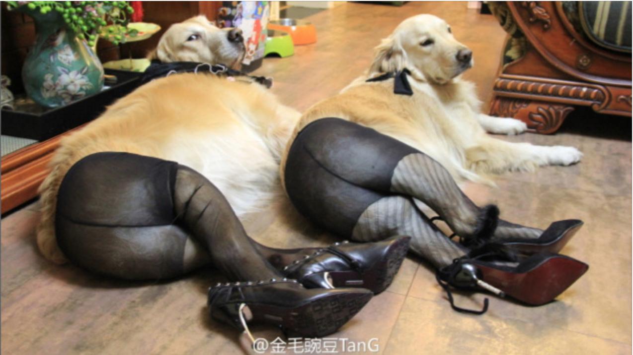 Прикольный танец женских ног отличная идея с чёрно белой одеждой и разными колготками молодцы девчата 13 фотография