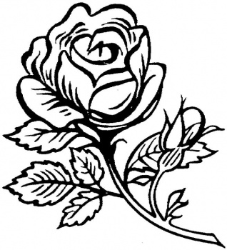 Only Roses Coloring Pages