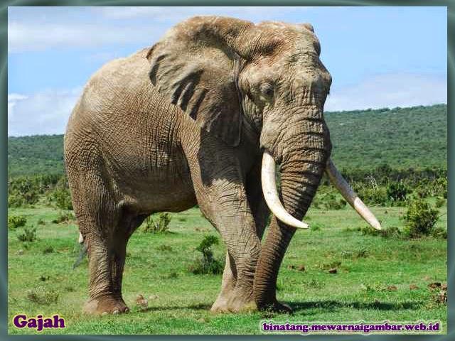 gambar gajah nama binatang dari huruf G