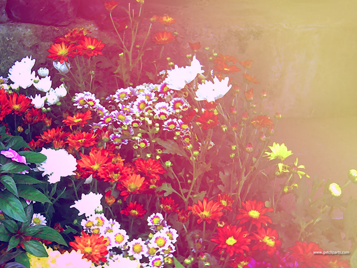 Flower Background Wallpaper  Desktop Wallpapers