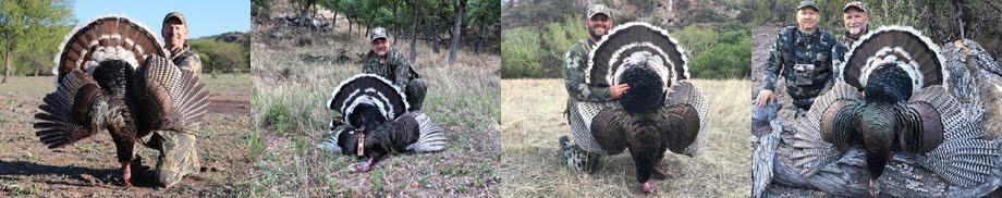 Goulds Turkey Hunt