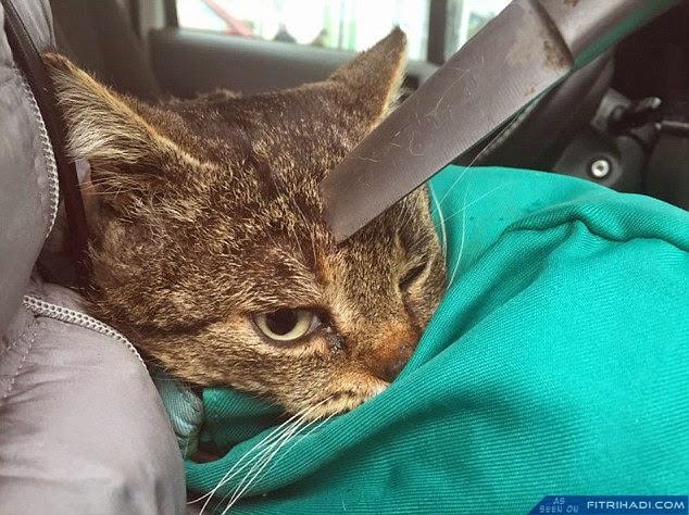 (Ngeri) Kucing Masih Hidup Walaupun Ditikam Di Kepala