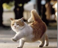 Rasulullah SAW sayangkan kucing=)