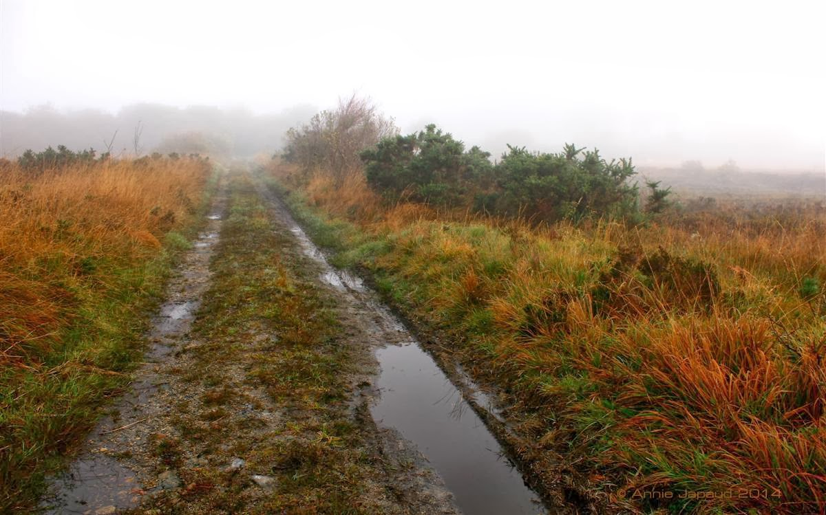 autumn scene, coloured grass, small road leading into the bogs, lots of puddles, fog