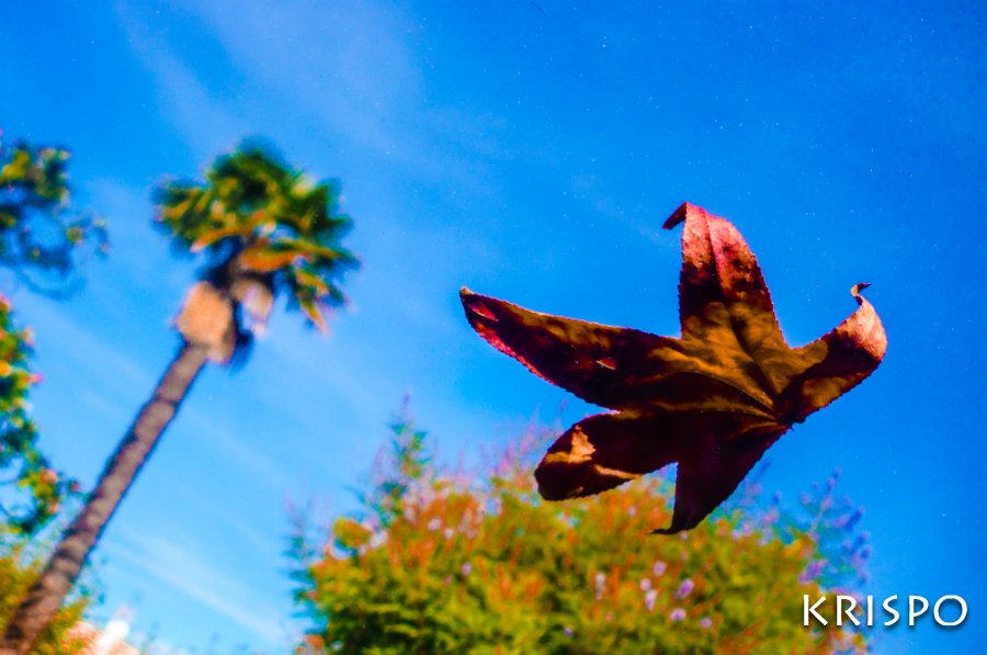 hoja roja de otoño cayendo desde el cielo