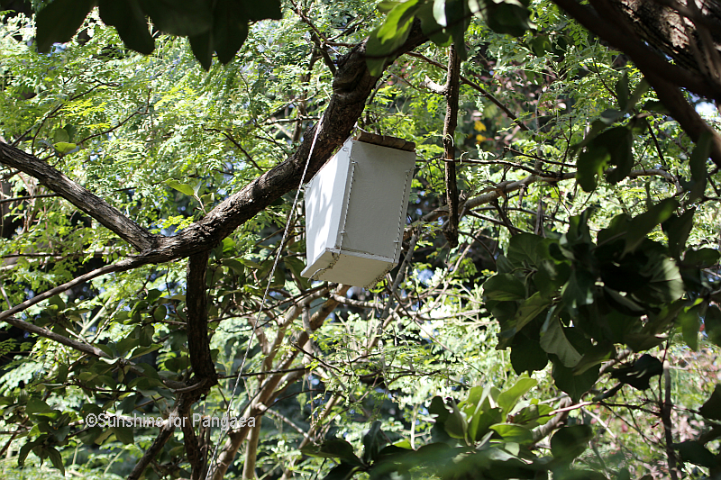 Bee hive in Gambia