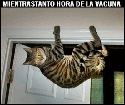meme-gato-vacuna
