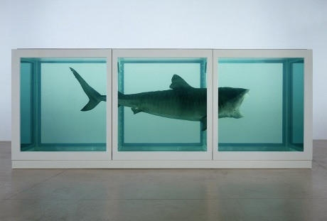 A Shark preserved in 3 welded steel tanks full of formaldahyde