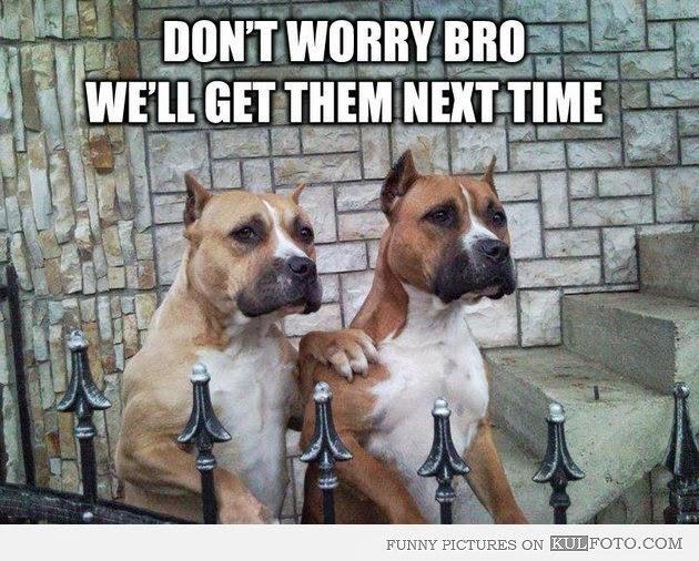 Can I Get My Dog Licensed At Petsmart
