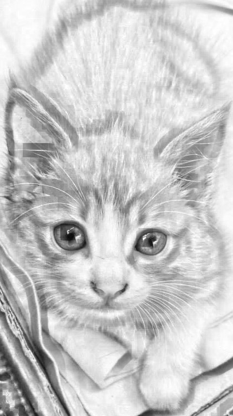 Free coloring page with baby cat