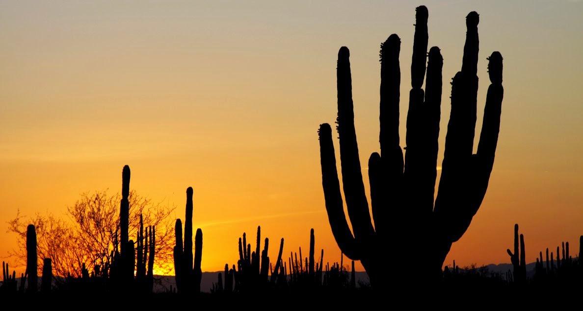 Desierto americano y biologia de los ecosistemas