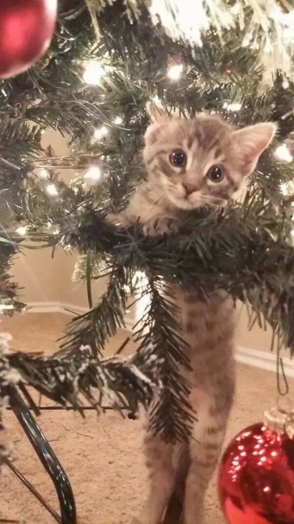 Funny cats - part 82 (40 pics + 10 gifs), cat photo, kitten playing in christmas tree