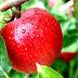 Apel dan Semangka, Pilihan Segar Plus Sehat Buat Berbuka