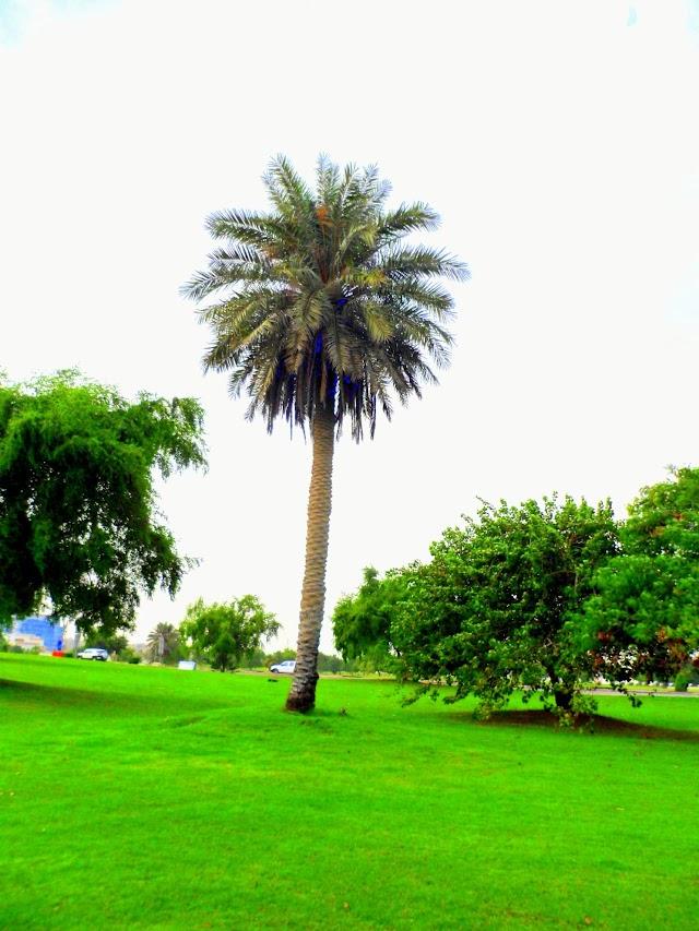 Doha Corniche Park Green Photos