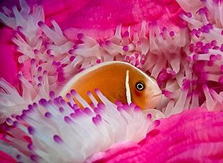 El mar con sus colores caprichosos como el rosa