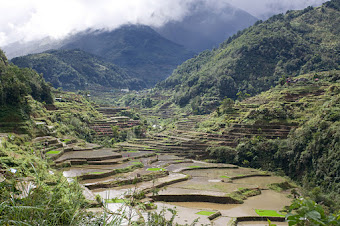 Le riz en montagne