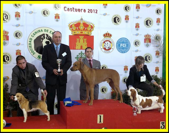 Rhodesian Ridgeback Ch. Aresvuma Ha-Shah ganador Grupo en Castuera