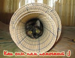 учавствую))))