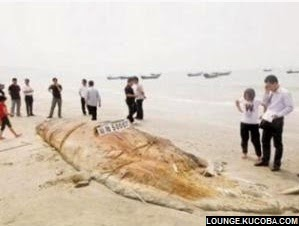 makhluk laut aneh yang ditemukan