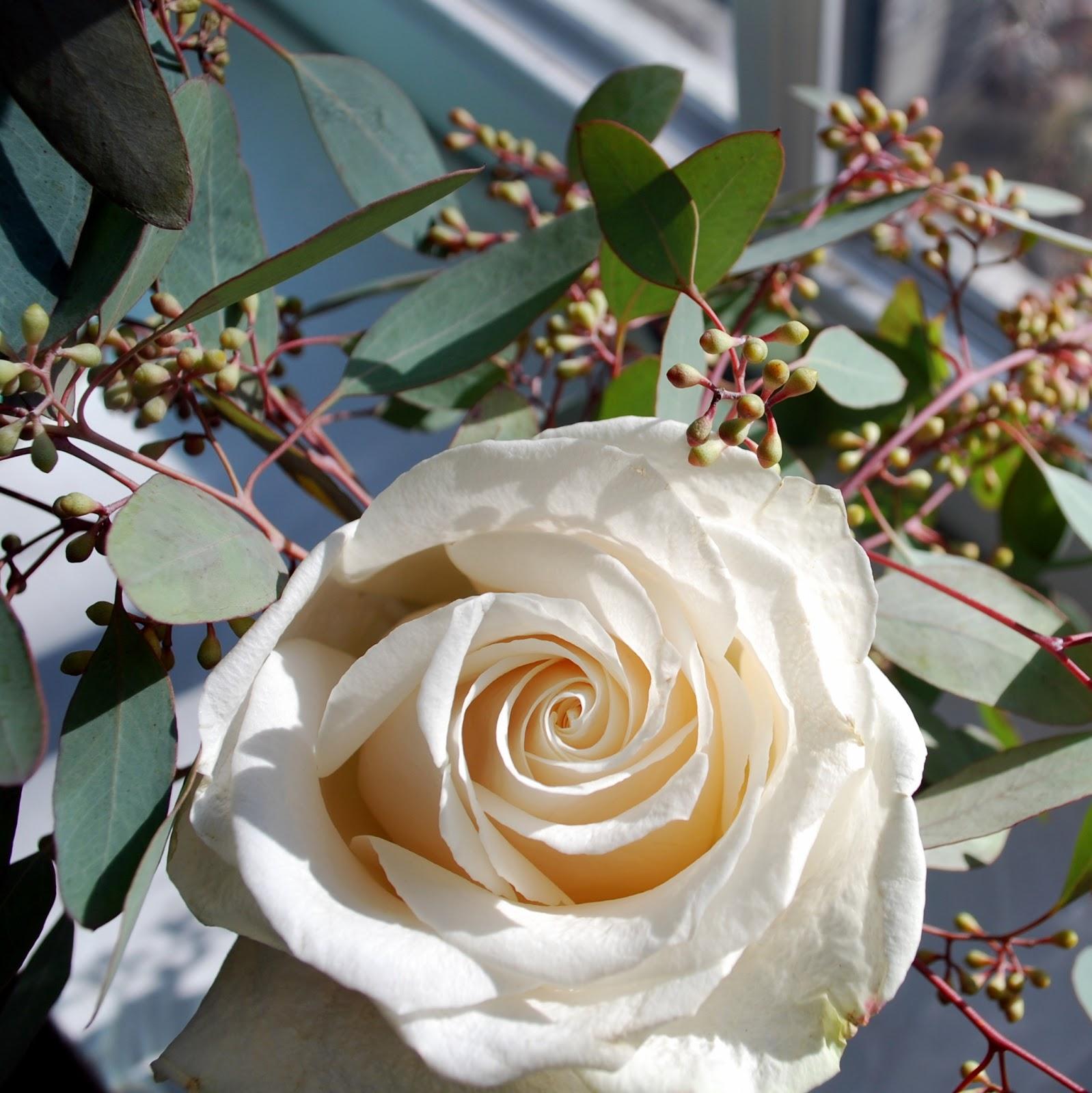 January Flowers Third Storyies