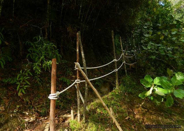 jungle tracking