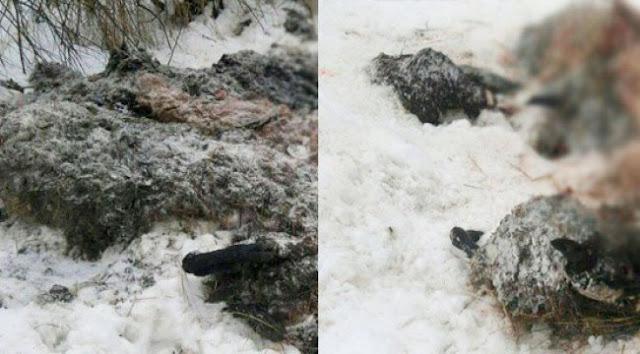Найдены туши мёртвых животных Сергиев Посад