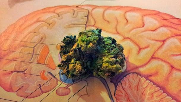 Consumo de maconha pode causar esquizofrenia?
