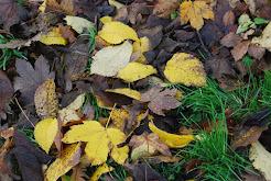 fallen leaves, November