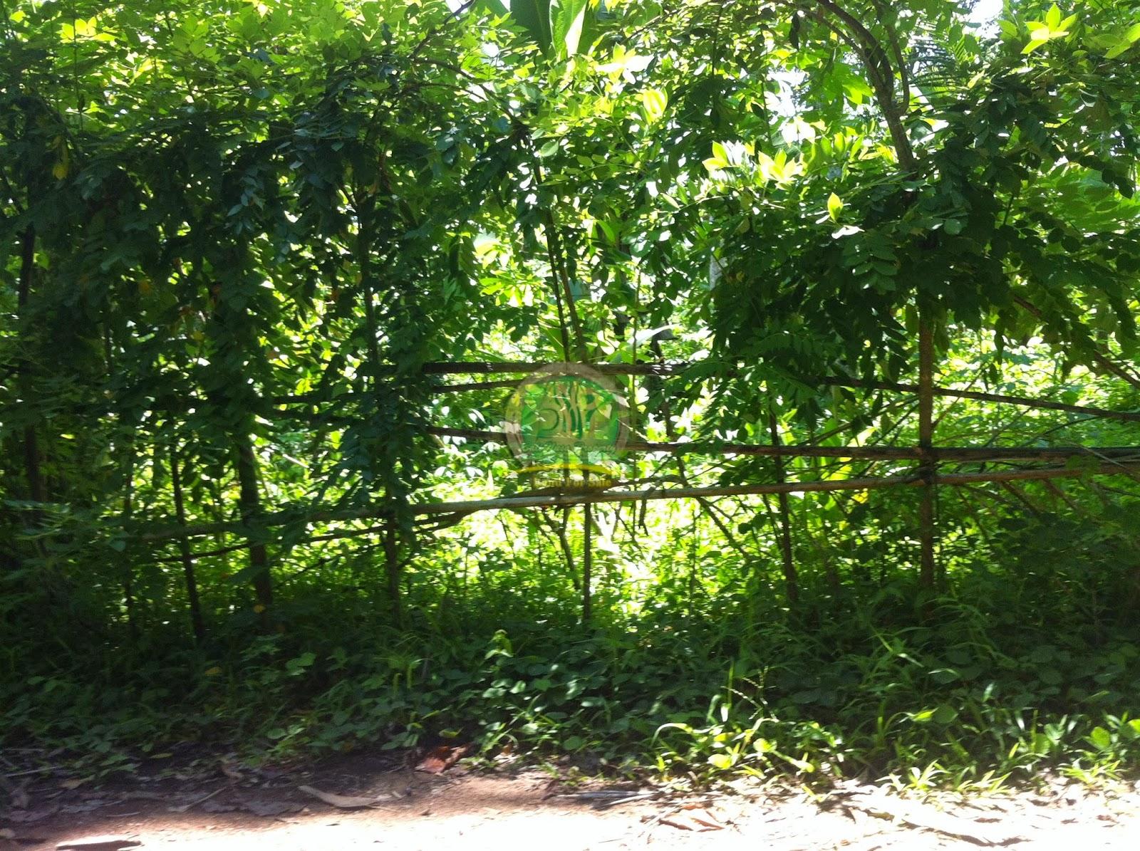 Tanah Murah di Gianyar bali cocok untuk perumahan