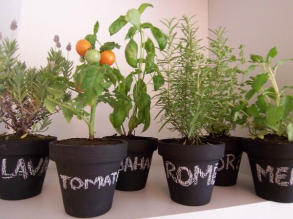 Viviendo en verde for Plantas para huerta organica