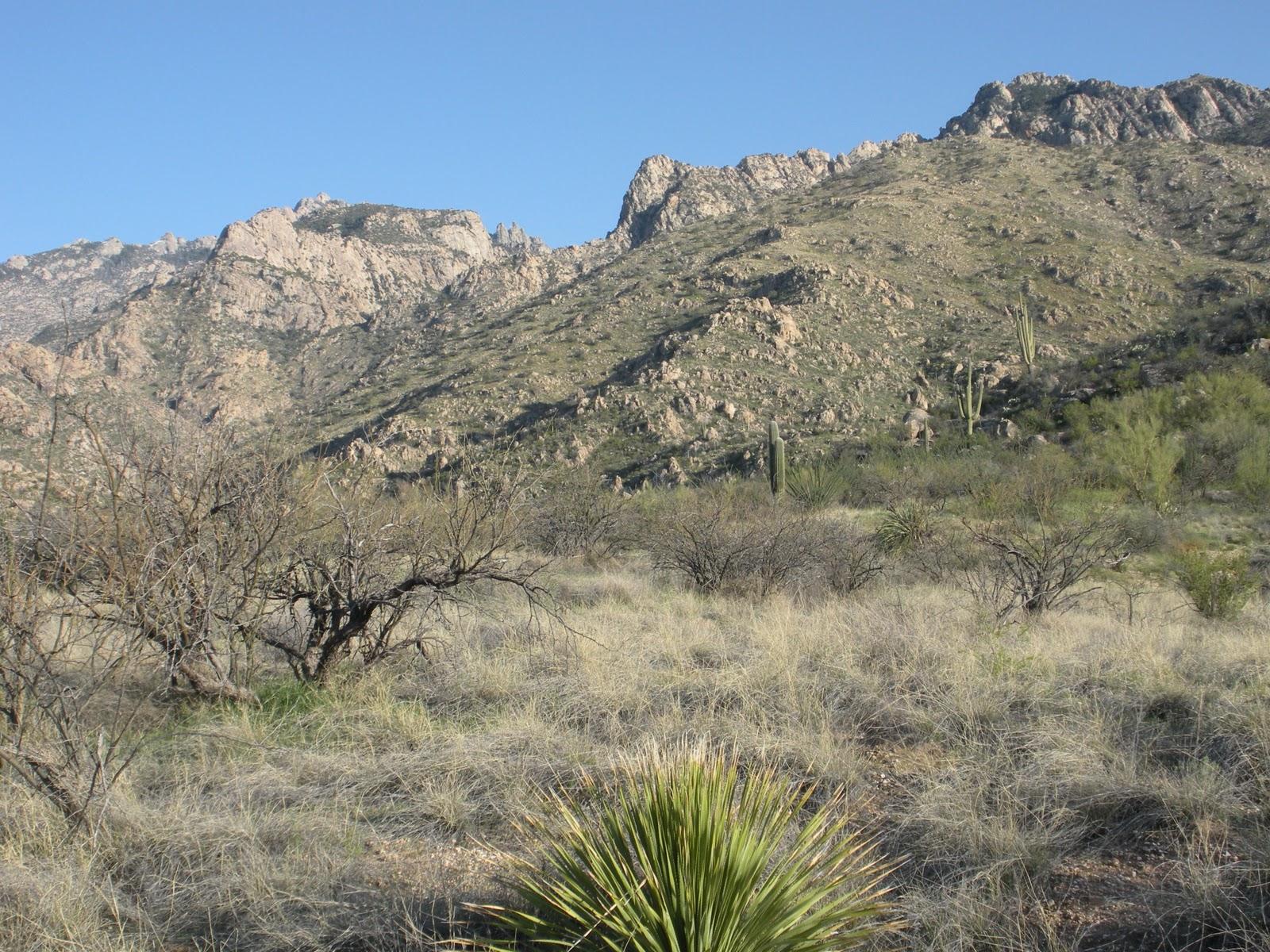 Csms Geology Post Santa Catalina Mountains