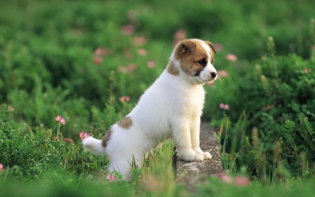 Cute White Little Dog Puppy