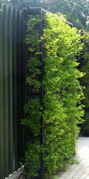 kebun, kebun vertkal, vertical garden, garden konsep