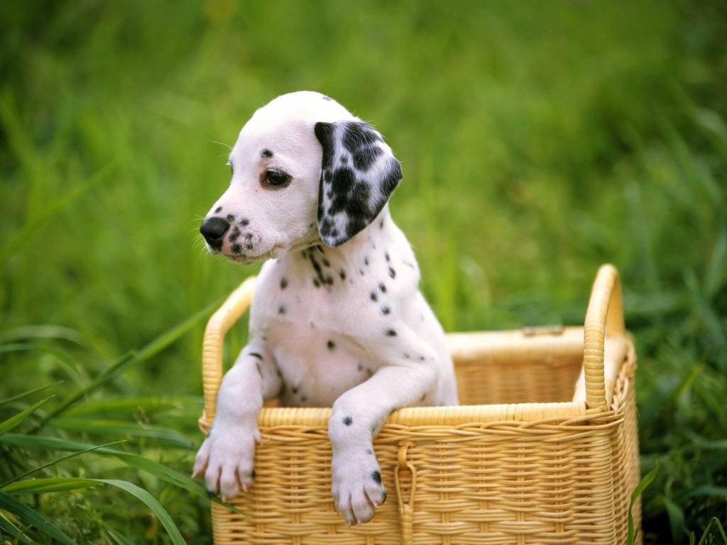 lauticastro: Perros muy lindos y cachorros